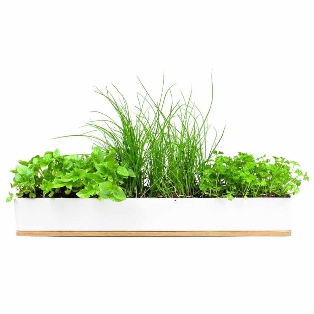 Windowsill Herb Planter: Micro Herbs Window Sill Planter Box Grow Kit
