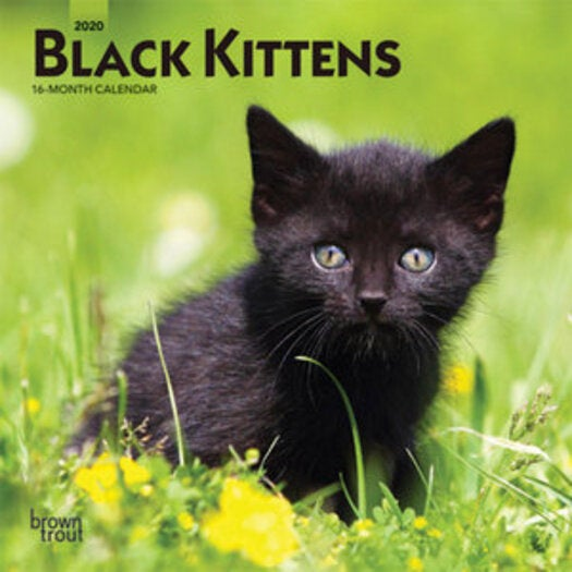 2020 Flourish Mini Calendar: Black Kittens 2020 Mini Wall Calendar