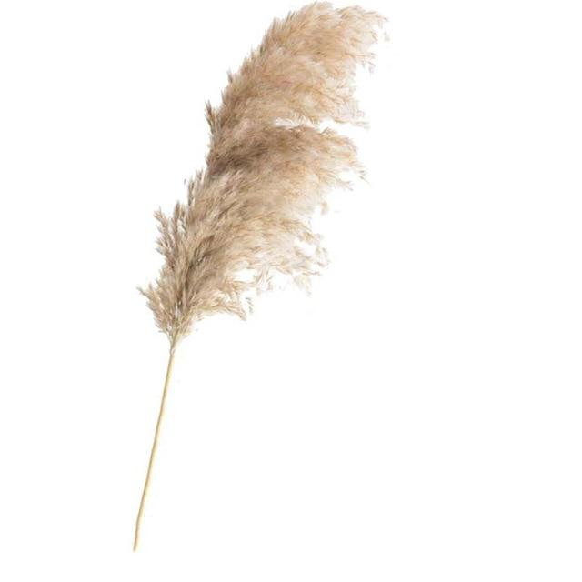 Pampas Grass Simple Home Decor Buy Artificial Grass 632138445790